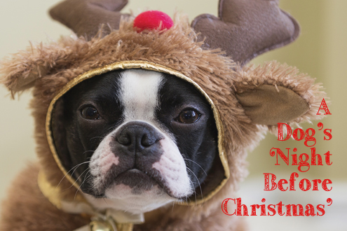 A Dog's 'Night Before Christmas'